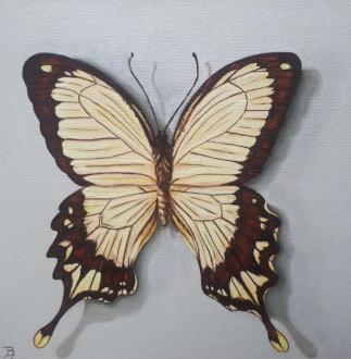 """Swallowtail"" Oil on canvas 20 x 20 cm"
